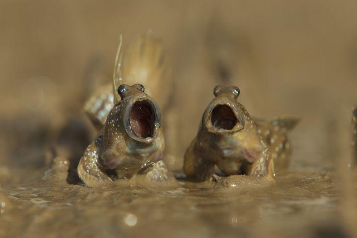 13 Peces del fango con talento, Daniel Trim