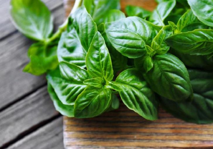 Albahaca: aroma, sabor y propiedades medicinales . Foto: Pixabay