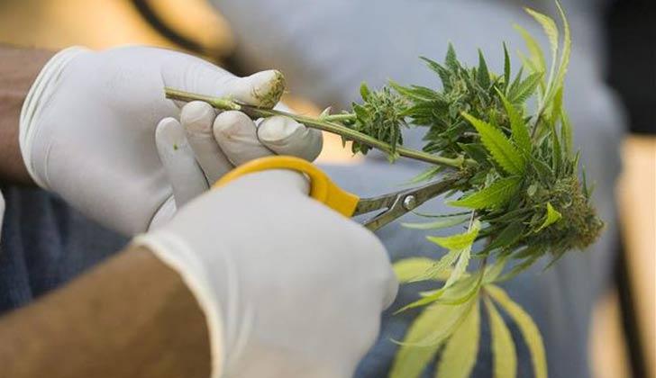 curso-medicina-cannabis