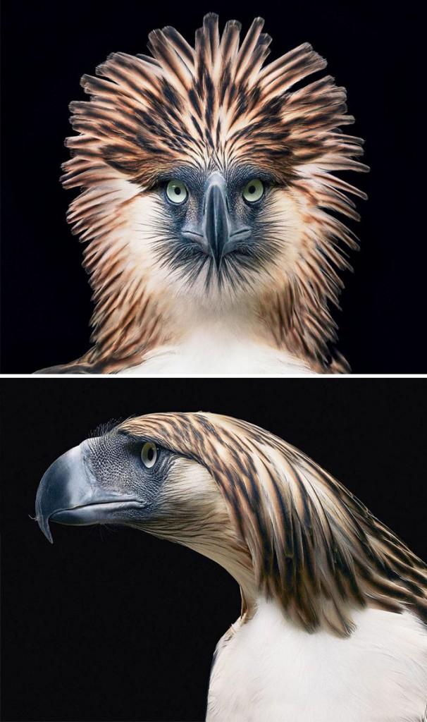 #3 Águila monera