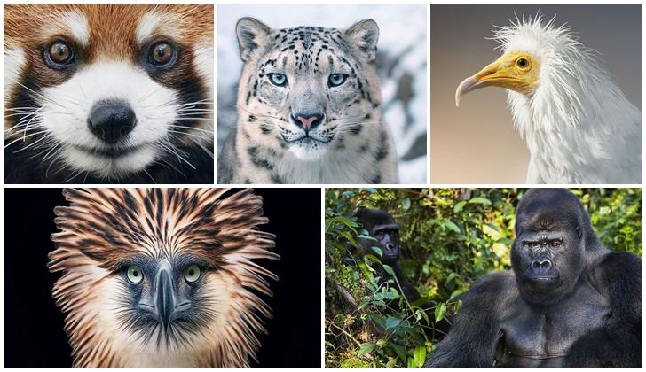 Tim Flach, el fotógrafo que mejor retrata a los animales en peligro de extinción.