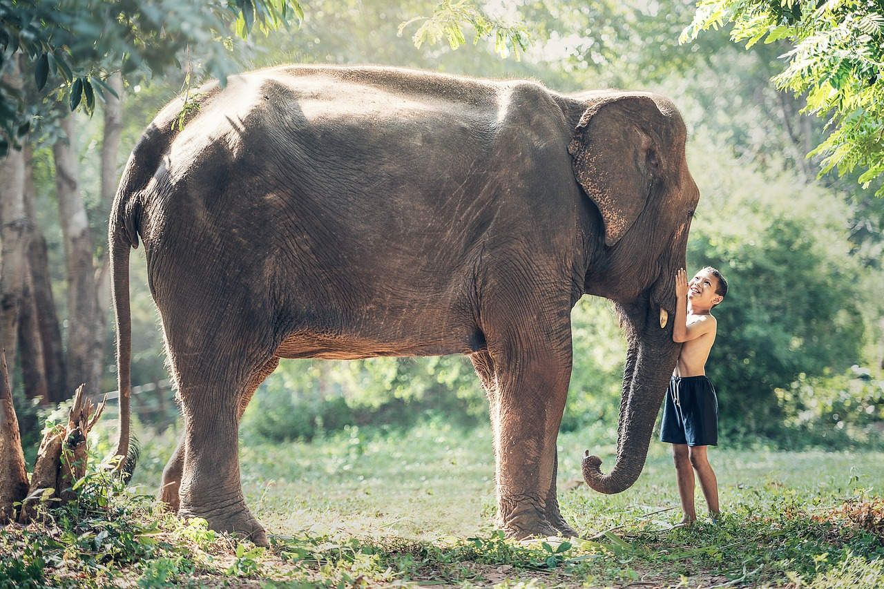 Un niño juega junto a un elefante africano. Foto: Pixabay