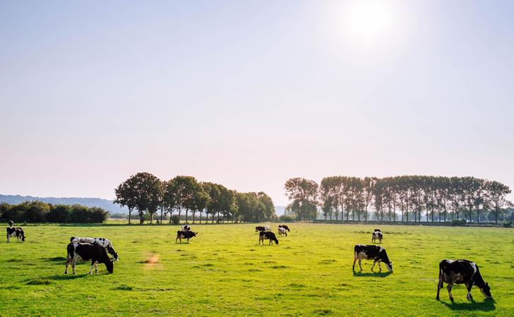 sector-lacteo-agropecuario