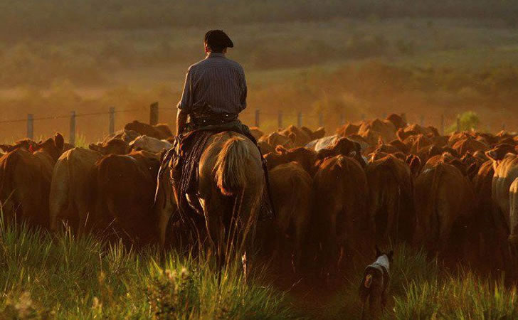 Trabajador Rural / Foto: Todo el campo
