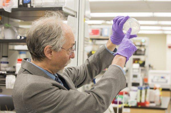 Jef Boeke lidera un proyecto para crear levadura con un genoma artificial. Foto: NUY School of Medicine