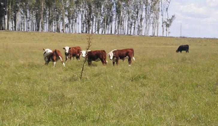 campo-agropecuario