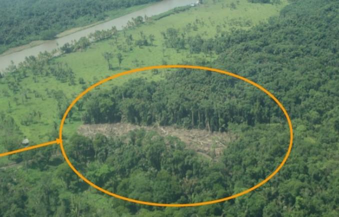 El Gobierno nicaragüense dañó de forma irreparable parte de la selva primaria de Isla Calero, según La Haya. Foto: Ministerio de Seguridad de Costa Rica