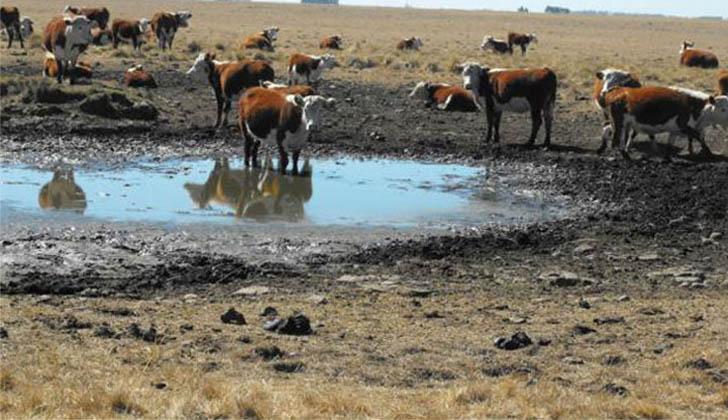 El Ministerio de Ganadería amplió este sábado las medidas especiales por sequía