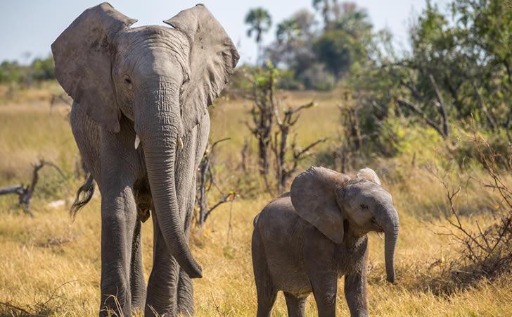 Elefante con su bebé / Foto: DocNY