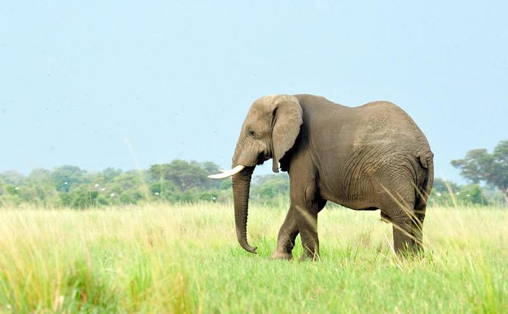 Foto: Wildlife Conservation Society