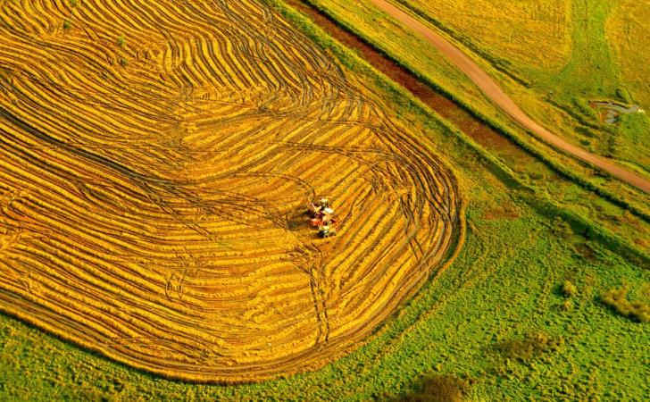Producción arrocera en Rocha / Foto: Turismo Rocha