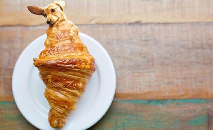 """""""Dogs In Food"""", la serie de fotos que combina perros y comida que triunfa en Instagram"""