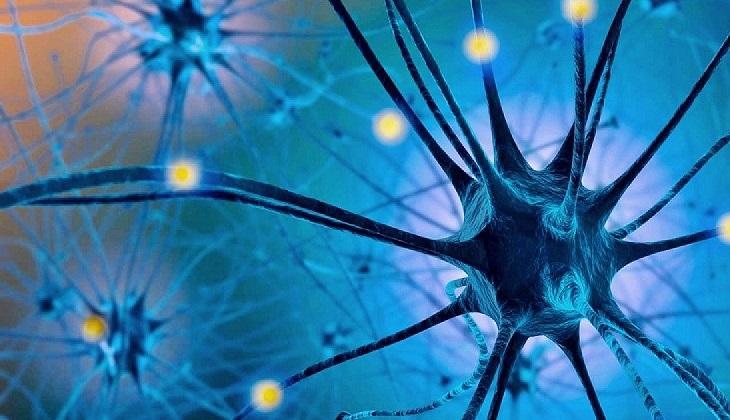 Estudio: la serotonina es capaz de acelerar el aprendizaje.