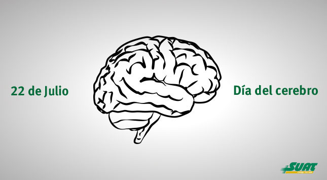 como-es-el-envejecimiento-normal-del-cerebro