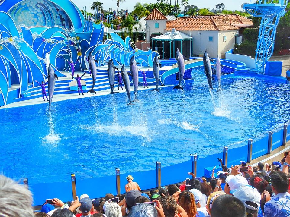 Delfines realizan un acto acrobático en SeaWorld. Se ha denunciado por años que sufren de estrés, depresión  y demencia por estar encerrados y haciendo cosas ajenas a su naturaleza. Foto: Pixabay