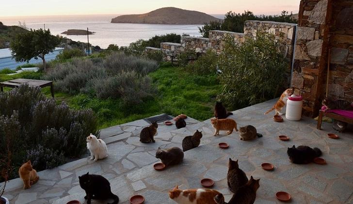 Una isla de Grecia ofrece un trabajo de ensueño (para los amantes de los gatos)