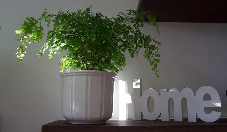 Beneficios de tener plantas en casa para la salud. Foto: Pixabay