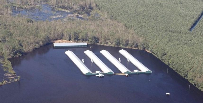Una granja en Carolina del Norte totalmente inundada. Foto: Larry Baldwin / Crystal Coast Waterkeeper.