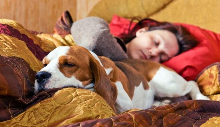Dormir con tu mascota no afecta al sueño