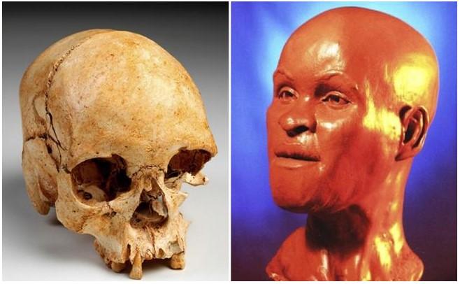 Museo Nacional de Brasil recupera 80% de los huesos del cráneo de ...