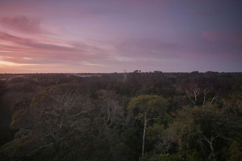 Las razones para salvar el Amazonas incluyen no solo los valores que se pueden cuantificar, sino también su belleza. Foto: Proyecto AmazonFACE