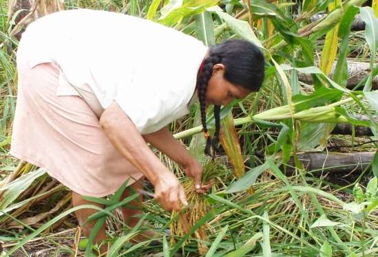 content-1541616952-tsimane-woman-foraging