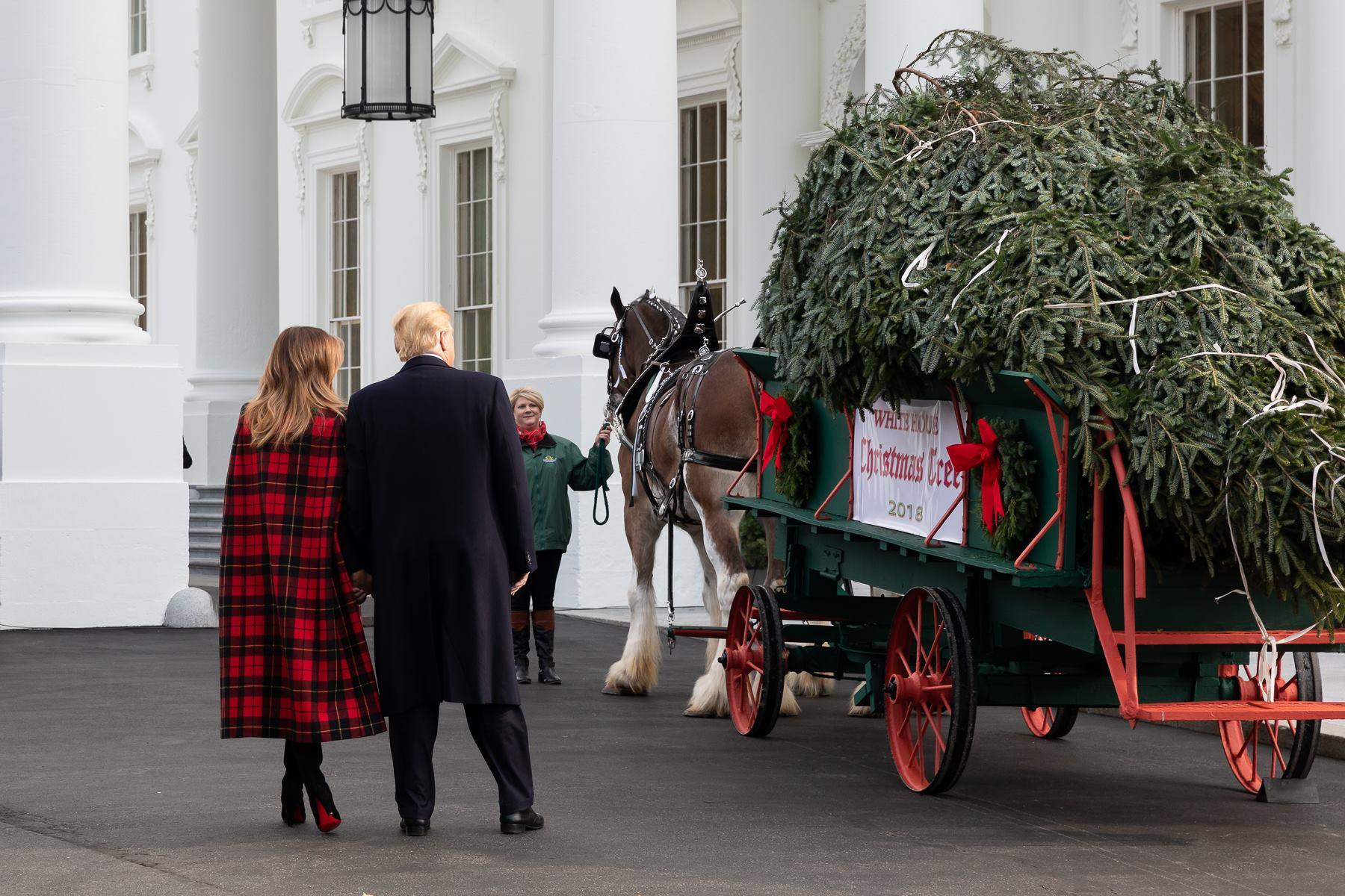 Donald y Melania Trump observando el árbol de navidad de la casa blanca, recién talado. Foto: The White House