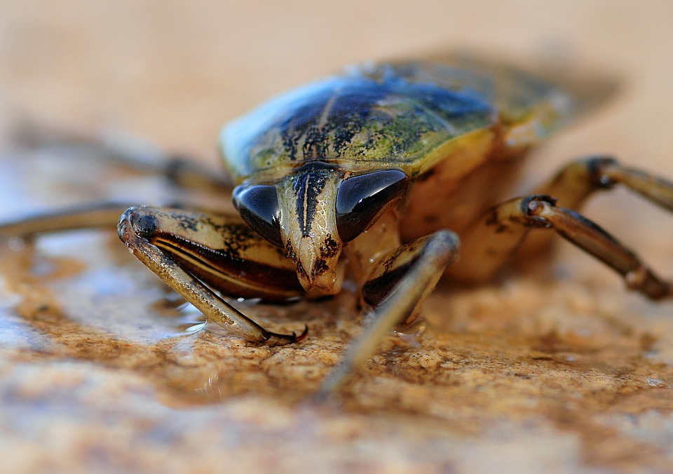 insect-622415_960_720