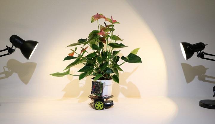 Crean una planta-robot capaz de desplazarse en busca de luz.