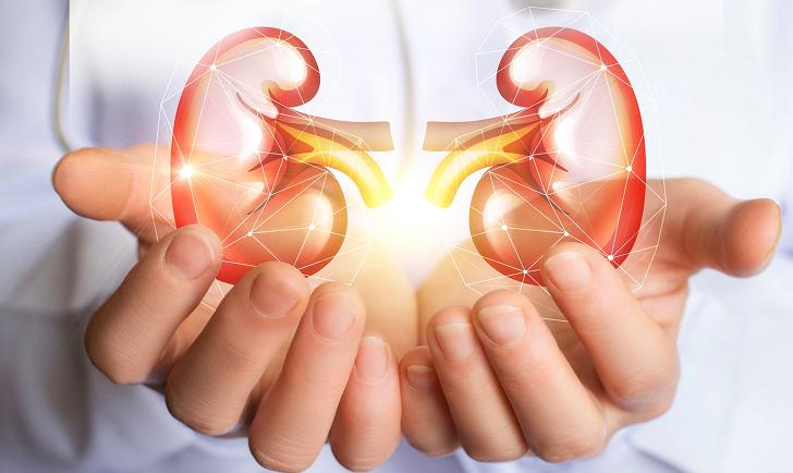 Cinco factores que pueden afectar los riñones