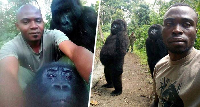 gorilla-selfie-fb-702x378