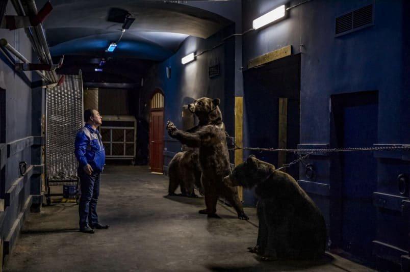 El dueño de tres osos encadenados y severamente maltratados los observa desde una distancia prudente. Foto cortesía de Kirsten Luce - National Geographic