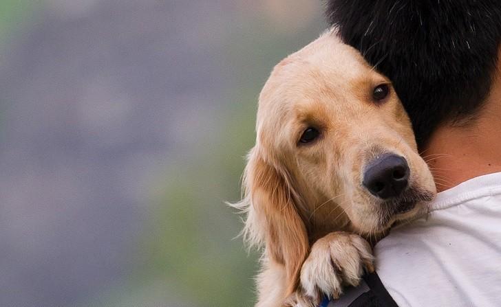 El estrés se contagia de los humanos a los perros