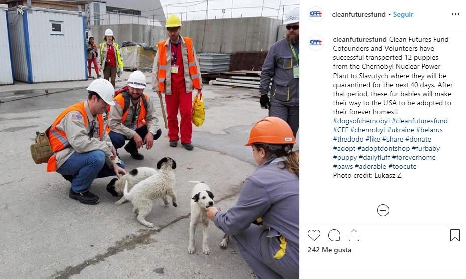 perros chernobil (2)