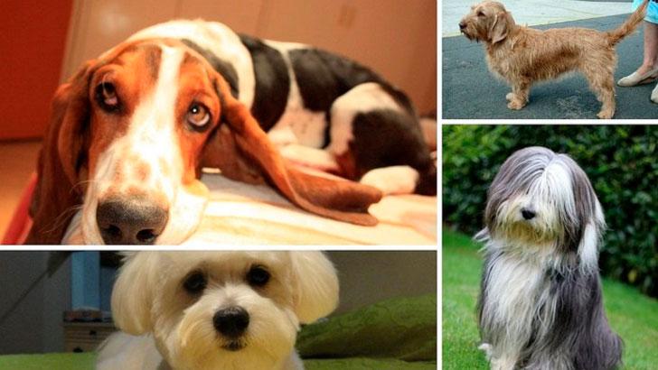 perros-populares-2019
