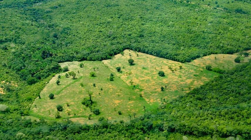 Vista aérea de la selva amazónica, cerca de Manaus, la capital del estado brasileño de Amazonas. Foto: Neil Palmer / CIAT / Flickr