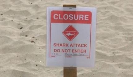 Un joven surfista muere atacado por un tiburón en California